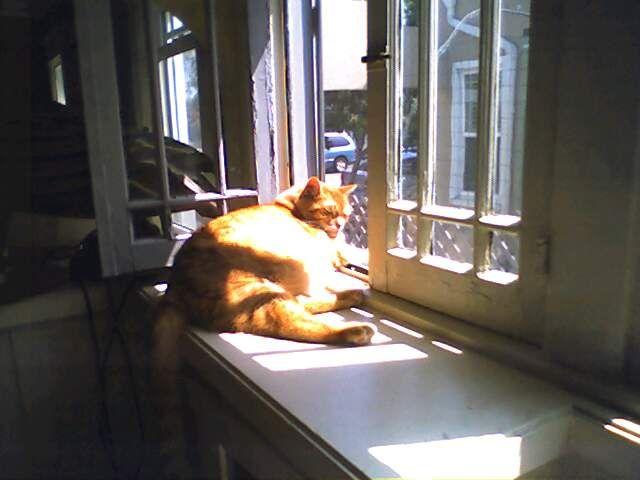 Crookshanks_in_window_3